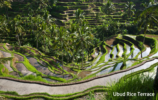 nugrahartaproperty.com - Bali Holiday: Which is Better Between Ubud or Canggu?